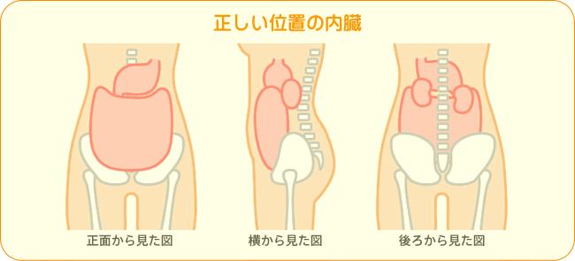 正常な内臓の位置